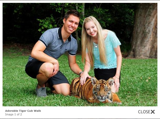 Australia Zoo Tiger walk