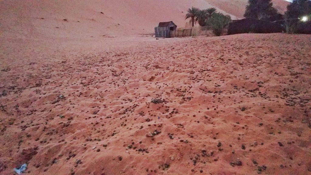 camel poop desert morocco