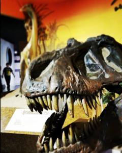 Fernbank skeleton dinosaur