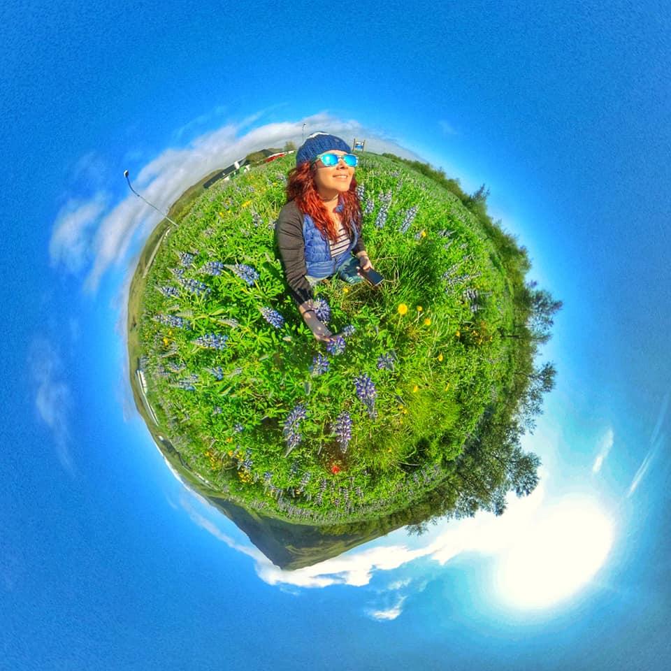 lavender field iceland