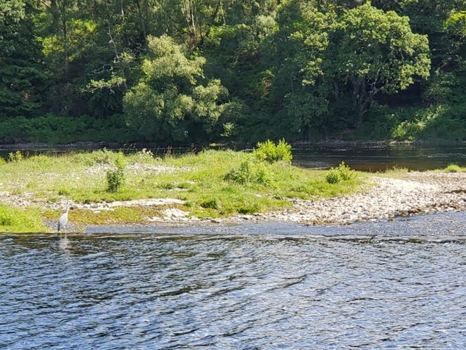 Wildlife on a loch ness boat tour