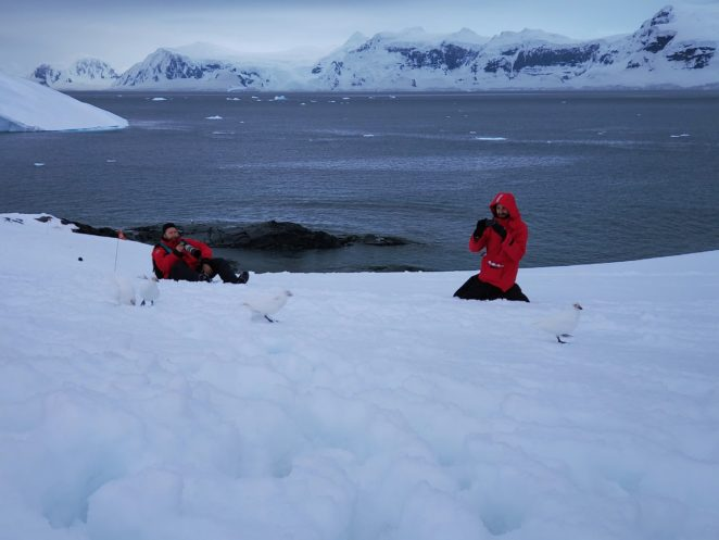 wildlife on antarctica camping