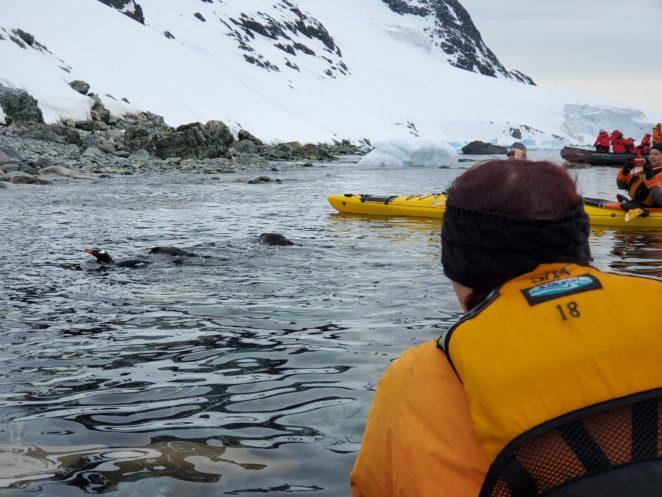 wildlife encounters when kayaking in antarctica