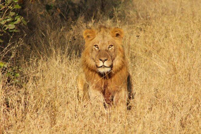 South Africa safari price