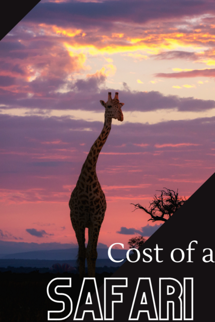 How much does it really cost to plan a safari in South Africa? Here's how much money you should save for your ultimate African safari! #southafrica #Africa #safari #travelbudget #travel